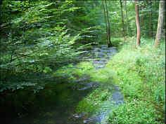 Die Püttlach im Karsttal E' Pottenstein in der Nähe des Aschenbrunnen.