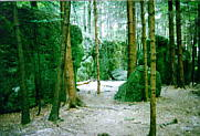 """""""Labyrinth"""" im Druidenhain"""