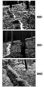 """Detail """"Steinerne Rinne"""" 1981, 1991 u. 2002"""