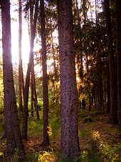 Reichswald nordöstlich Furth