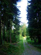 Reichswald im Quellbereich des Höllenbaches