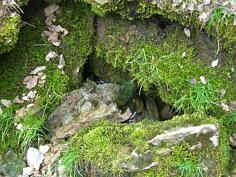 """wassererfüllte Quelle 2 des """"Kleinen Tummlers"""" im Trockental der Leinleiter."""