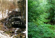 Die grossen Kalktuffterrassen der Lillach bei Dorfhaus/Ofr. im Sommer und im Winter