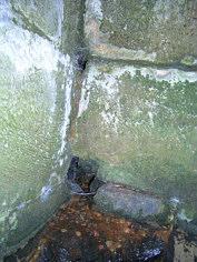 Der an eine Kluftkreuzung in den anstehenden Burgsandsteinen gebundene Quellaustritt in der NNW-Ecke der Margarethenbrunnen-Quellkammer.