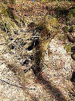 Eichelgarten-Ponor