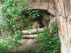 Raubtiergehege im Tiergarten am Schmausenbuck