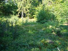 """Die """"Vogelhüll"""" (Doline D_04) im Hochwald am N-Hang des Schloßbergs, 1000 m NNW' Haidhof/Ofr."""