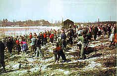 Begrünung Silberbuck 1955