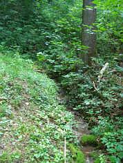 Die Wolfsgrabenquelle E' Streitberg/Ofr.