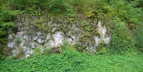 pleistozäner bis rezenter Kalktuff an der Muschelquelle in Streitberg/Ofr.