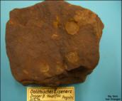 oolithisches Eisenerz (33% Fe) des Dogger beta; Pegnitz/Ofr.