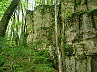 Frankendolomite am Kupferberg bei Aicha/Opf.